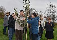 Posvojitev drevesa v mestnem sadovnjaku